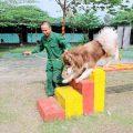 Trung tâm huấn luyện chó nghiệp vụ chuyên nghiệp nhất